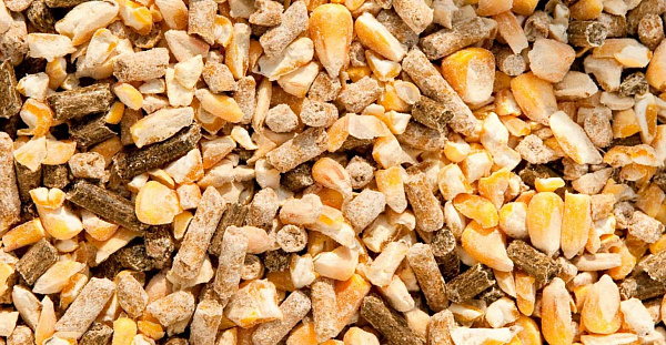 Russian Feed industry outlook is positive for 2021
